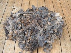 Ginger- Romney Fleece