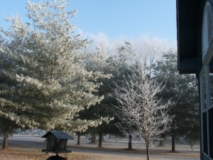 Frosted Front Yard