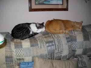 Sleepy Kitty's