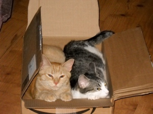 Cats in a box!