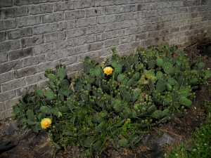 Cactus 5-2010